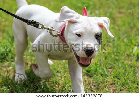 Happy puppy - stock photo