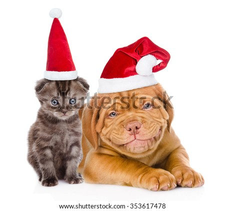 Happy puppy and tiny kitten in red santa hats lying together. isolated on white background