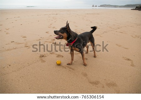 Happy rescued mixed-breed dog and his ball