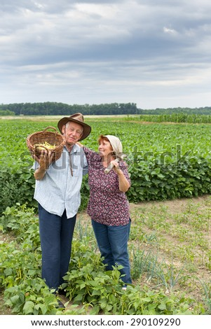 Happy senior couple peasants standing and hugging in the yellow bean field - stock photo