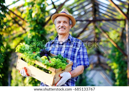 Happy senior man gardener holding a box with vegetables in front of greenhouse
