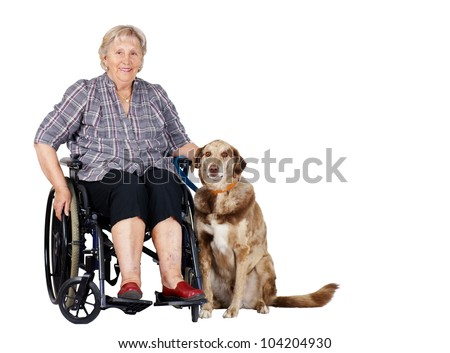 Happy senior woman in wheelchair with her big dog, great for zoo therapy, guiding dogs or other health or medical issues. - stock photo