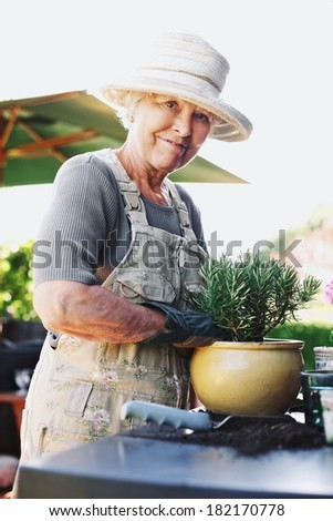 Happy senior woman planting new plant in terracotta pot on a counter in backyard. Senior female gardener working in backyard - stock photo