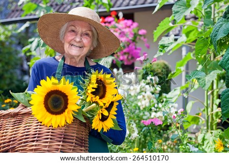 Happy Senior Woman with Brown Hat Carrying Baskets of Fresh Sunflowers at the Garden. Smiling at the Camera. - stock photo