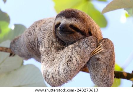 Happy sloth hanging on the tree - stock photo