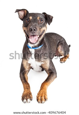 Happy smiling crossbreed dog laying over white - stock photo