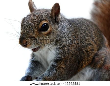 Happy squirrel - stock photo