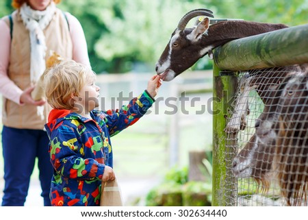 Happy toddler boy feeding goats on an animal farm. Warm summer day. Active leisure with children outdoors. - stock photo