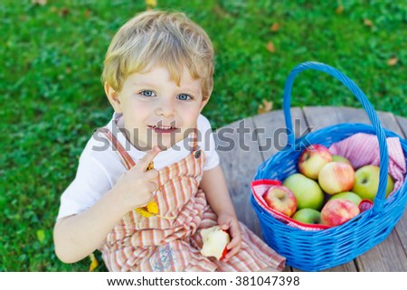 Happy toddler boy with big blue basket picking and eating red apples in fruit orchard, outdoors. Child having fun with gardening and harvesting. Lifestyle, organic food, family concept. - stock photo