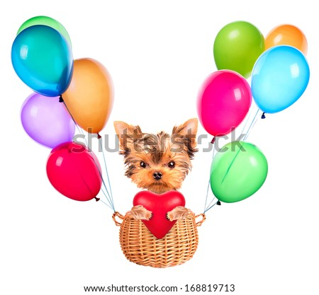 happy valentine dog flying in a basket with air balloons