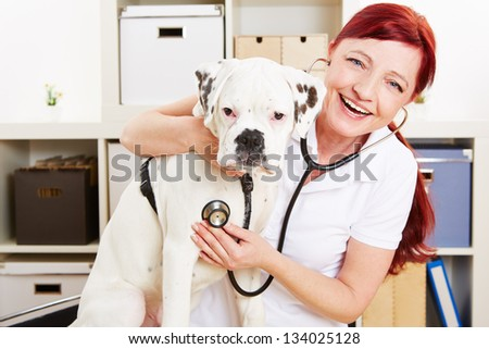 Happy veterinarian auscultating boxer dog with stethoscope in a clinic