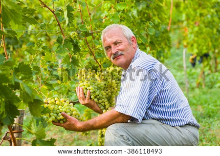 Happy viticulture expert content with this year's produce on the grape fields.