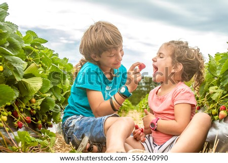 happy young child boy and girl picking and eating strawberries on a plantation