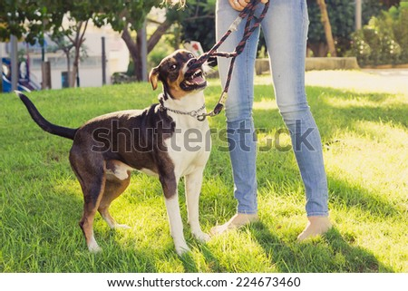 Happy young woman playing with her dog at a park - stock photo