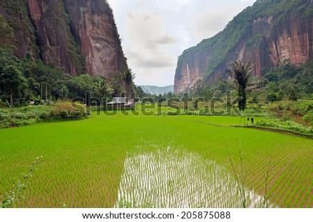 Harau Valley.  It is an area of natural  located halfway between Pekanbaru and Bukittinggi. West Sumatra. Indonesia. - stock photo