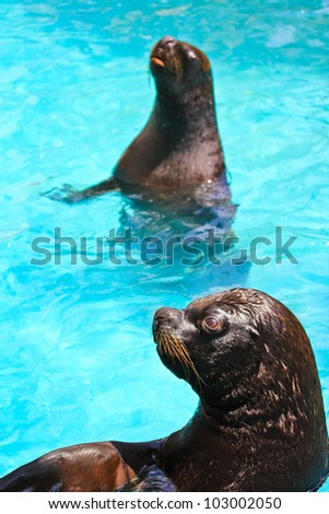 harbor seal zoo - stock photo