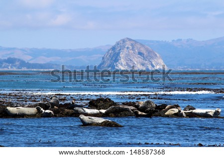 Harbor Seals and Morro Rock, Central Coast, California, USA - stock photo