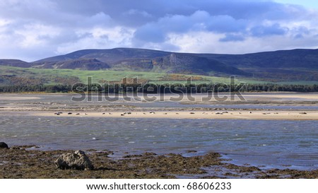 Harbour seals on a sand bank in Northern Scotland - stock photo