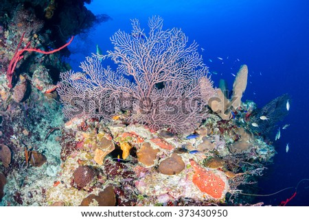 Hard and soft corals on a healthy tropical coral reef - stock photo