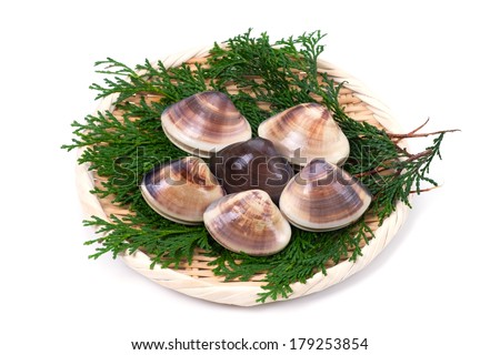 hard clam-Meretrix lamarckii, This image is available for clipping work.  - stock photo