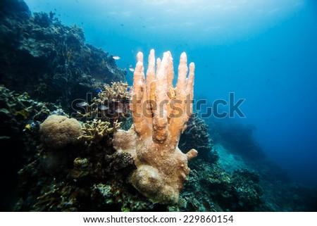hard coral - stock photo