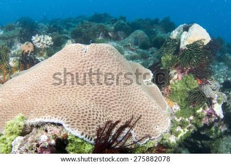 Hard coral reef. - stock photo
