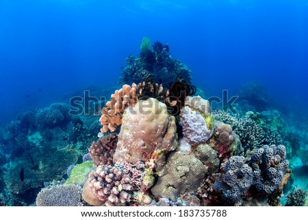 Hard corals and Crinoids on a tropical coral reef - stock photo
