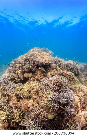Hard corals and tropical fish around a healthy coral reef - stock photo