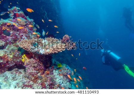 Hard corals with sea lilies, Maldives