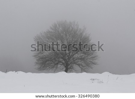 Hard winter with snow storm, isolated single tree and dark sky - stock photo