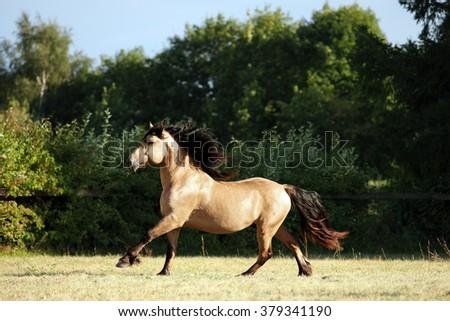 Hard working peasants horse walks in corral  - stock photo