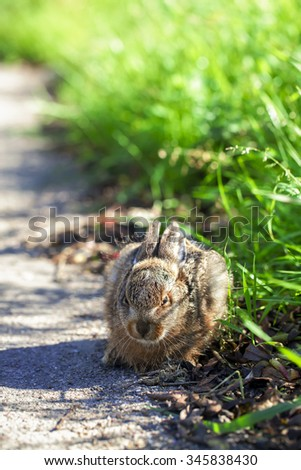 Hare - cowering - high size - stock photo