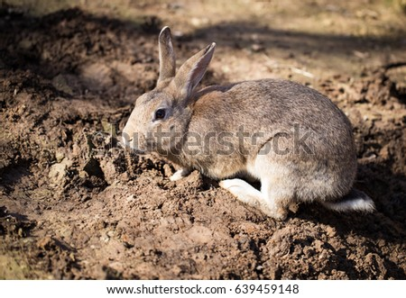 Hares on the ground in the wild