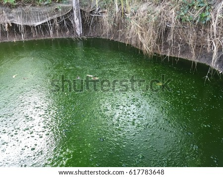 Harmful algae bloom in an aquaculture pond