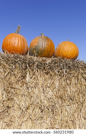 harvest background with three orange pumpkins on a bale of straw