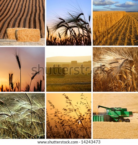 harvest collection - stock photo