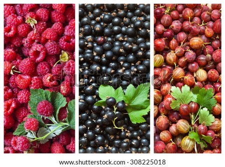 Harvest garden berries - raspberries, currants, gooseberries. Collage of berry backgrounds with green leaves - stock photo