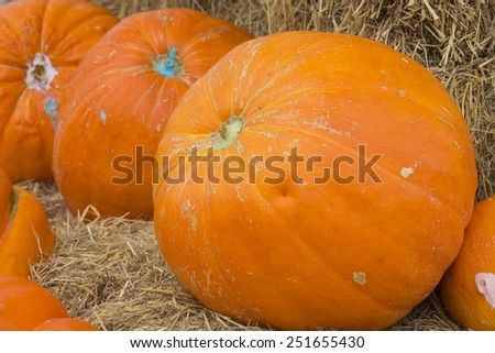 Harvest giants pumpkin background