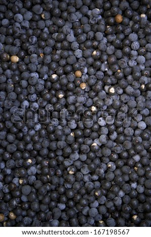 Harvest of fresh acai berries at farmers market in Nordeste Brazil