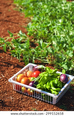 Harvest of fresh vegetables in a white box in the garden - stock photo
