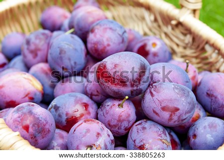 harvest of plums in the basket