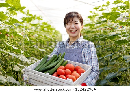 Harvest of vegetables in greenhouses