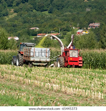 Harvest on a corn field on a sunny day in early autumn with agricultural machinery - tractor and combine - stock photo