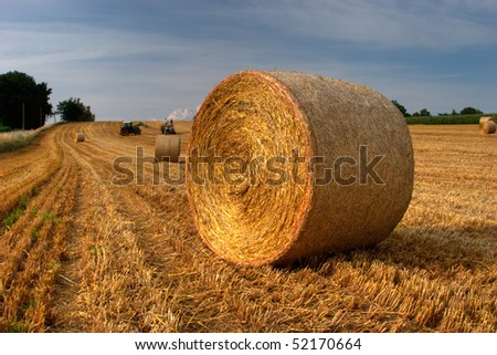 Harvest on a field of wheat