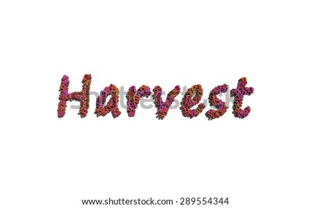 harvest text flower with white background concept of typography - stock photo