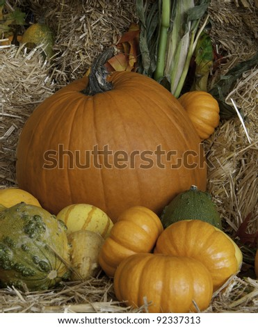Harvest Time.  Pumpkins and brightly colored squash nestled among hay bales and corn stalks. - stock photo