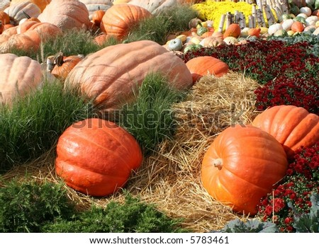 Harvest Time Pumpkins and Gourds - stock photo
