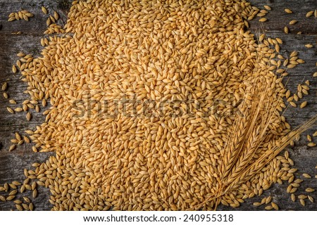 Harvested Barley with Three Spikes in Bottom Right Corner on Rustic Old Barn Wood Background  - stock photo