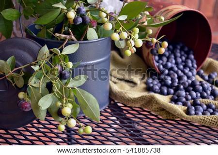 Harvested Blueberries and Branches