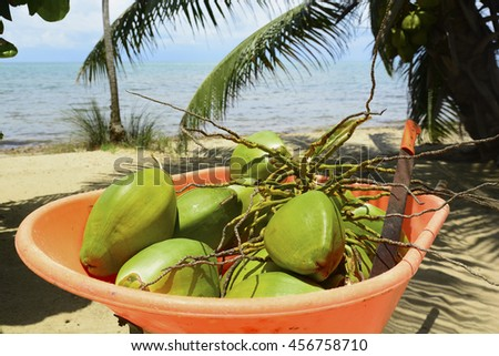 Harvested coconuts in a wheelbarrow - stock photo